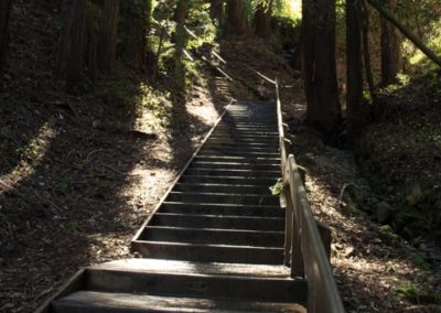 Dipsea Stairs – Upper section first set
