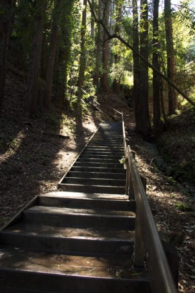 Dipsea Stairs - Upper section first set
