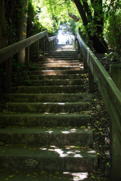 Dipsea Stairs - View of the top