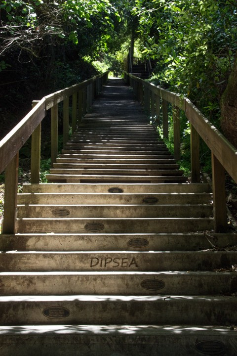 Dipsea Stairs – The Start