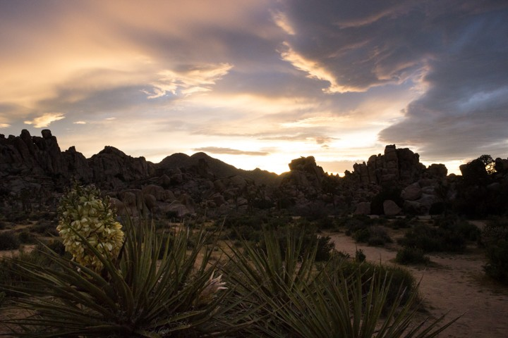 Joshua Tree Clouds at Sunset