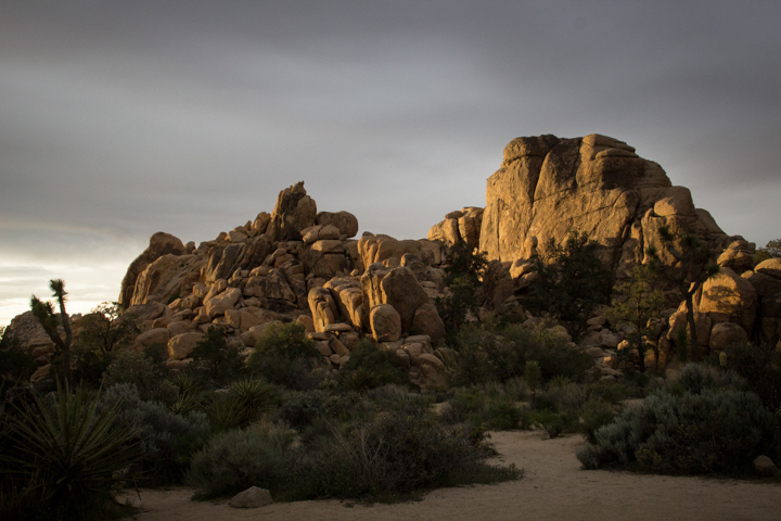 Golden light, Joshua Tree