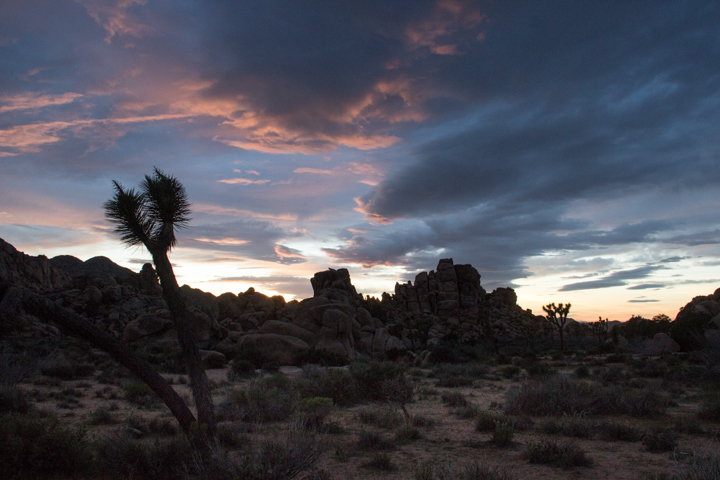 Last light Joshua Tree